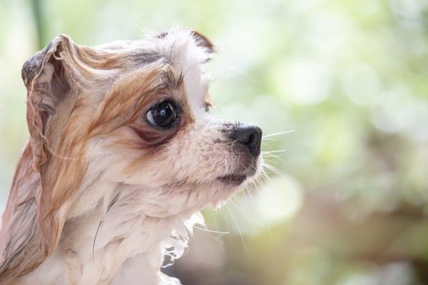 Cachorro olhando para o lado