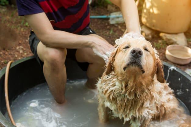Homem dando banho no cachorro