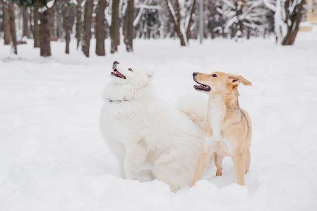 Dois cachorros brincando na neve