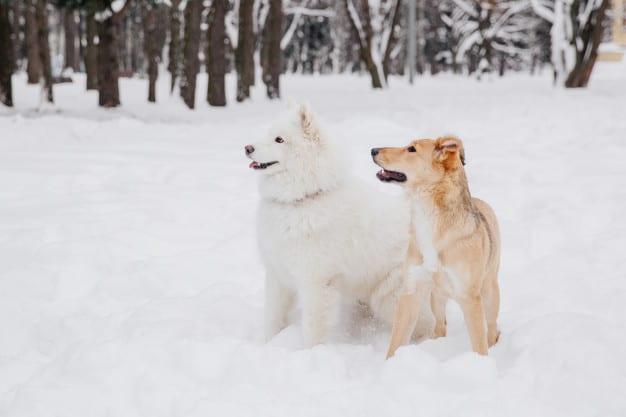 Dois cachorros olhando para o lado