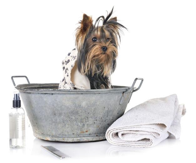 Cuidados na hora do banho do cachorro