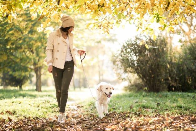 Labrador e uma mulher passeando