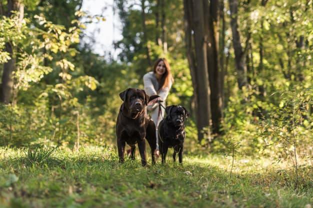 Dois cachorros e uma mulher andando na floresta