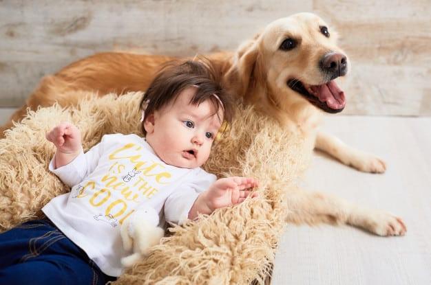 Bebe e Labrador