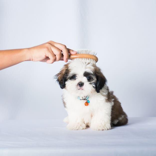 Penteando o pelo do cachorro