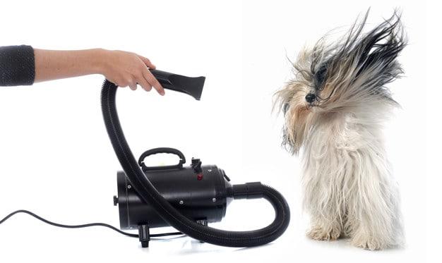 Secando o cachorro
