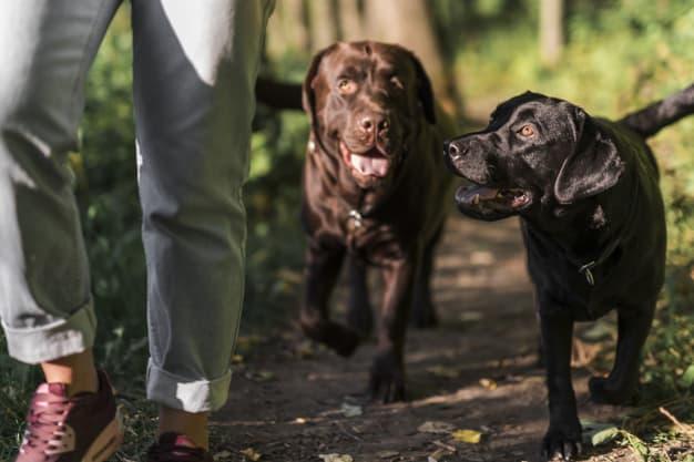 Dois cachorros caminhando na floresta