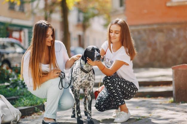 Duas mulheres fazendo carinho no Dálmata