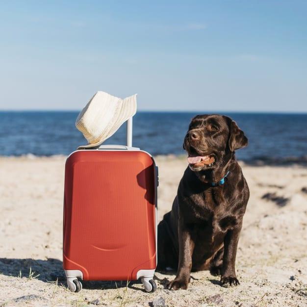 Cachorro do lado de uma mala na praia