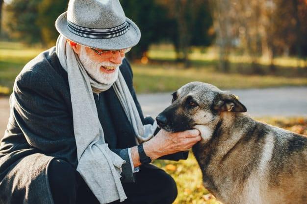 Mudanças comuns nos cães idosos