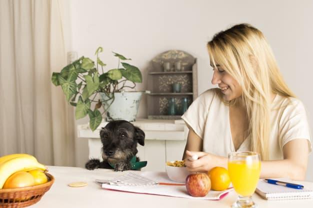 Cachorro olhando para a cestinha de frutas