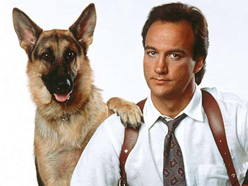Os 10 Cachorros Mais Famosos do Cinema