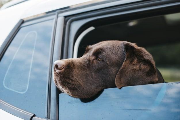Cachorro com a cabeça pra fora da janela do carro
