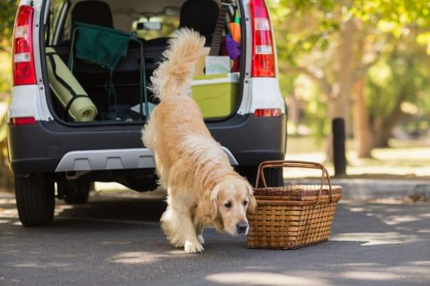 Cachorro saindo do carro