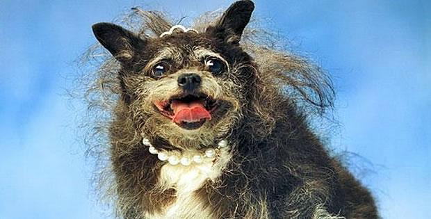 Os 10 Cachorros Mais Feios Do Mundo Web Cachorros
