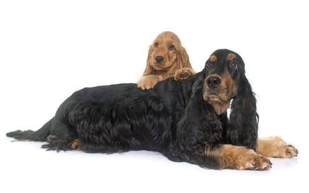 Ter mais de um cão: Desafio ou uma boa ideia?