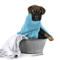 Escolha a tosa ideal para o seu cão