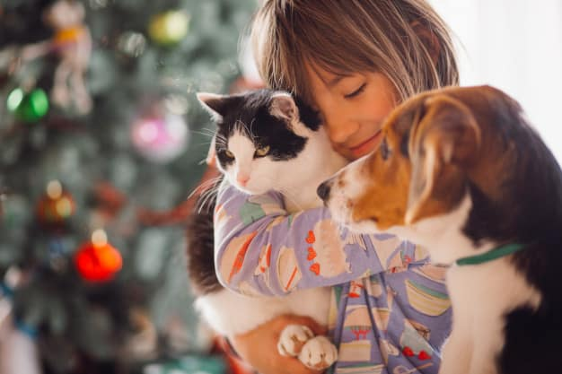 Dicas para melhorar a convivência entre cães e gatos