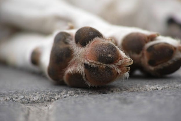 Limpar as patas: Saiba quando e como fazer isso