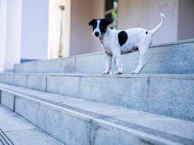 Roubo e furto de cães: Como agir?