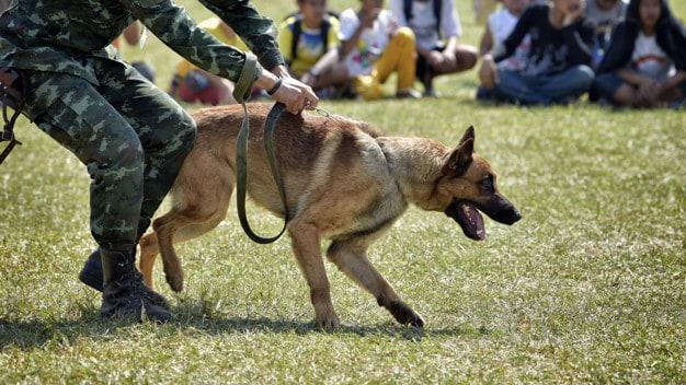Adoção de cães aposentados