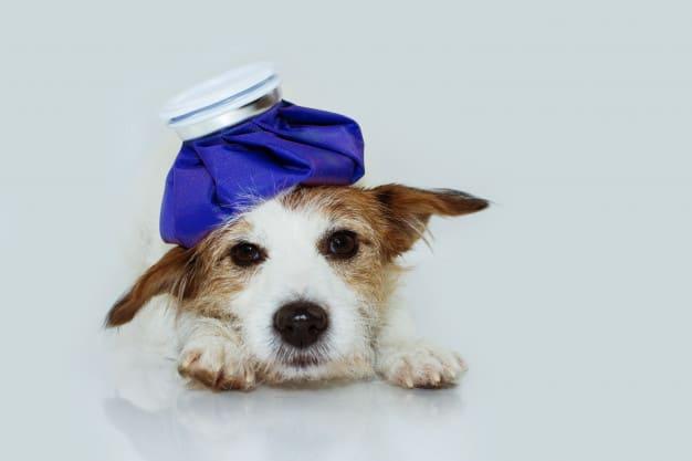 Saiba como cuidar de cães com resfriado