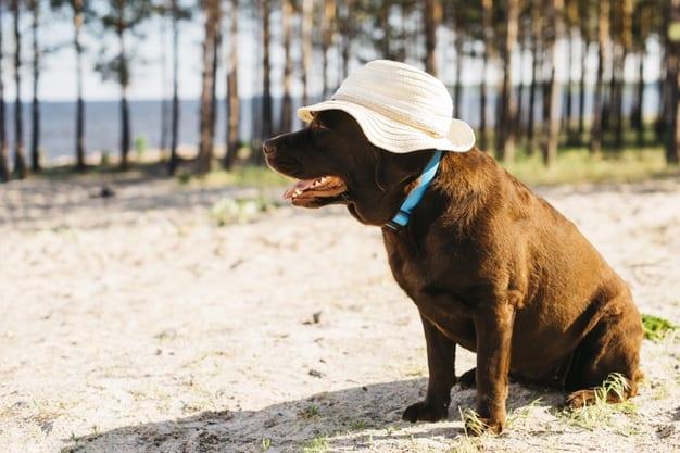 Entenda porque os cães gostam tanto de banho de sol