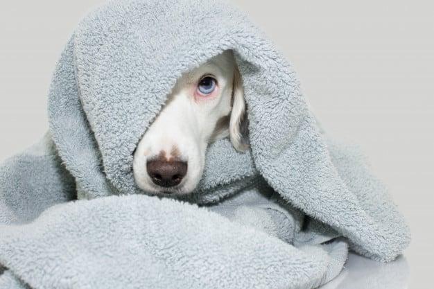 Mudança de Comportamento após tosa canina