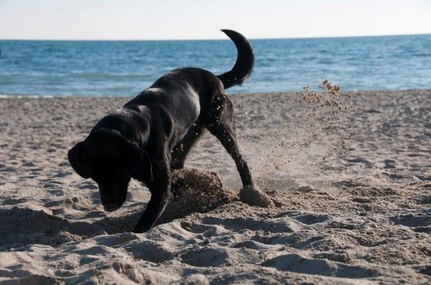 Saiba porque os cães esfregam o bumbum no chão