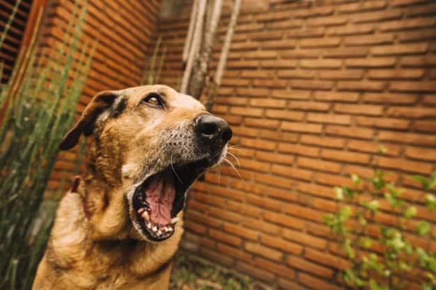 Bigode canino: Entenda suas utilidades e o que você pode ou não fazer