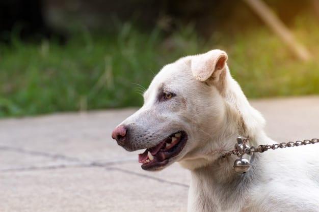 Qual cão mais morde humanos