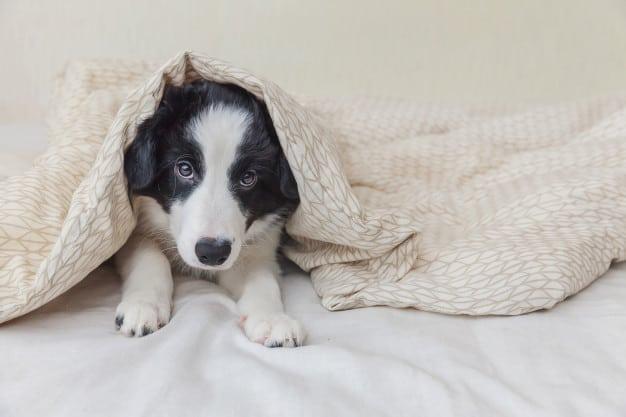 Saiba quais são os cuidados necessários com cães recém-nascidos