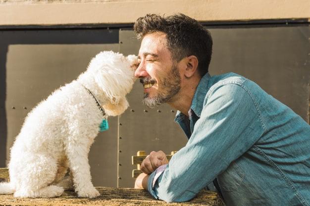 Como lidar com cães agressivos que costumavam ser dóceis