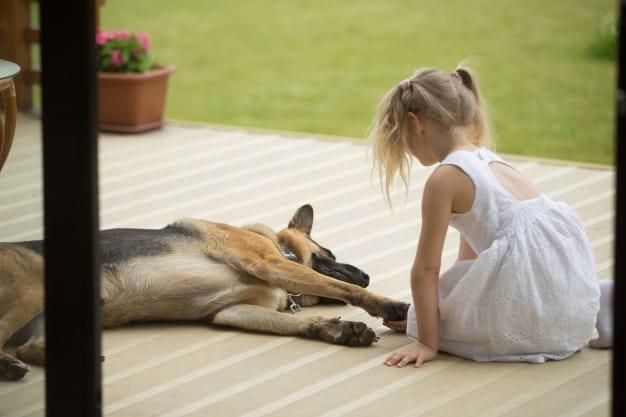 Saiba como cuidar das almofadinhas do seu cão