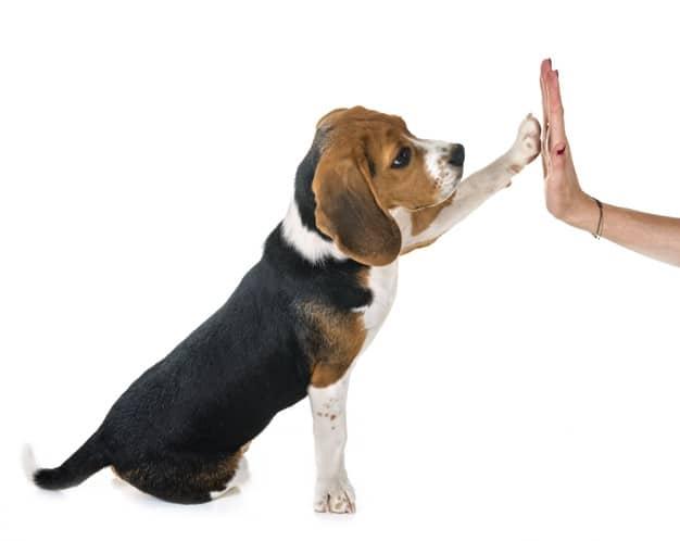 Aprenda a evitar possessividade em cães filhotes