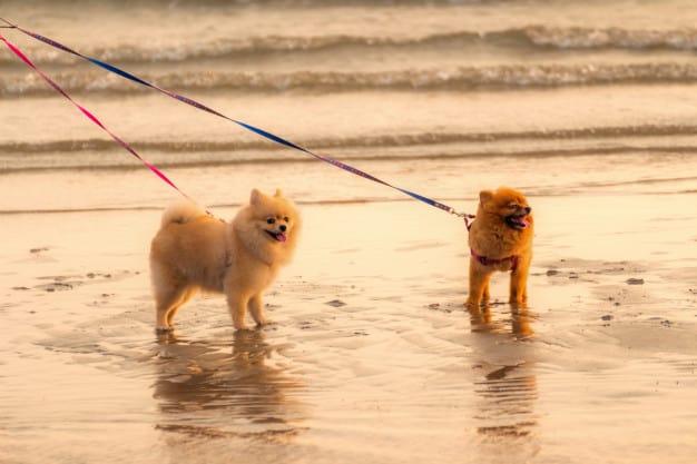 Como socializar cães intolerantes com outros animais