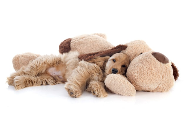 Brinquedos para não dar a cães destruidores