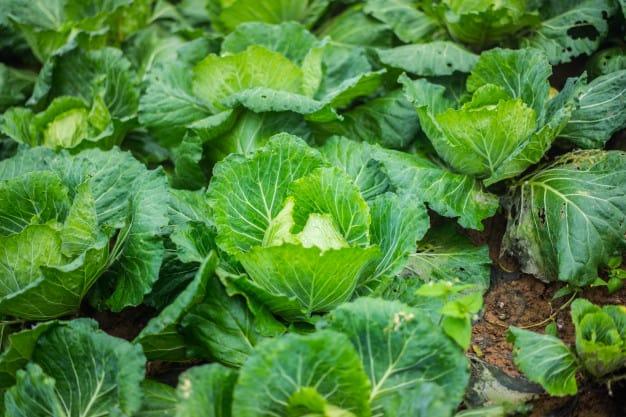 10 Legumes e Verduras Permitidos Para Cães