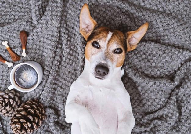 Sinais de calma: Linguagem dos cães e comportamento