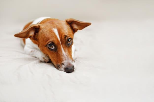Dessensibilização: Como agir quando o cão tem medo de um estímulo