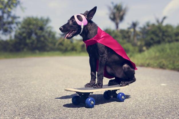 Habituação: Entenda como acostumar cães a estímulos