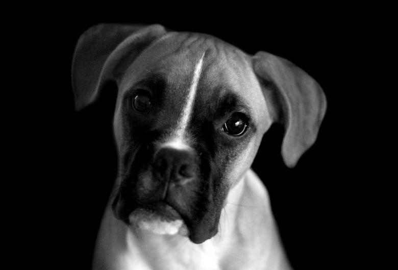 Atitudes que deixam um cachorro triste