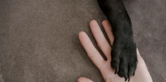 mão de cachorro e mão de humano