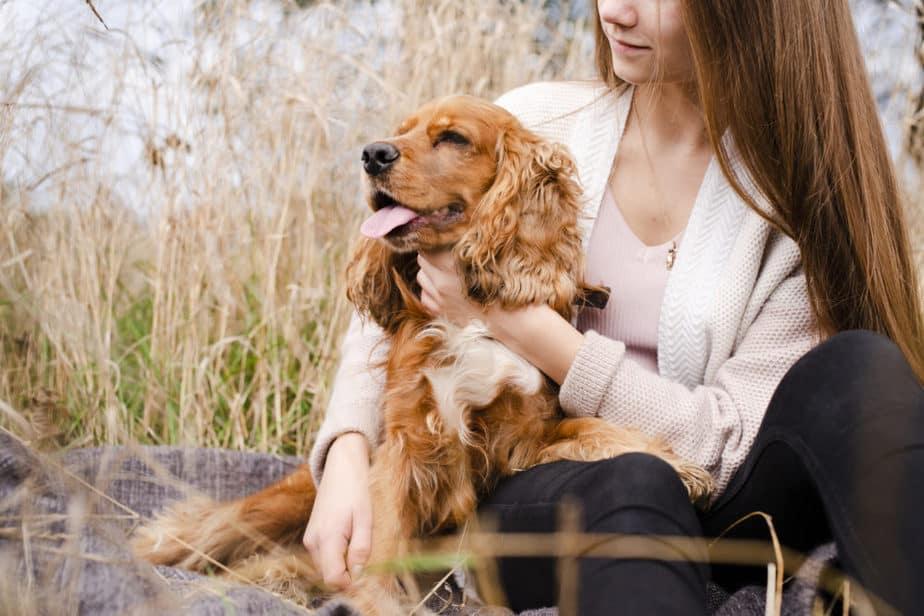 Cachorro Border Collie abraçado