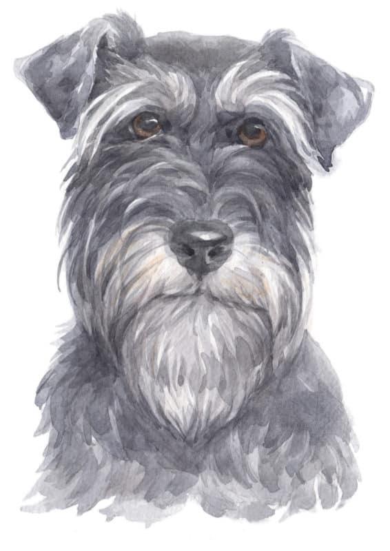 Ilustração de cachorro preto