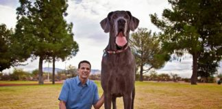 Zeus com seu tutor em parque