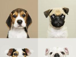 Quadro com quatro filhotes de raças diferentes cão ideal para voce