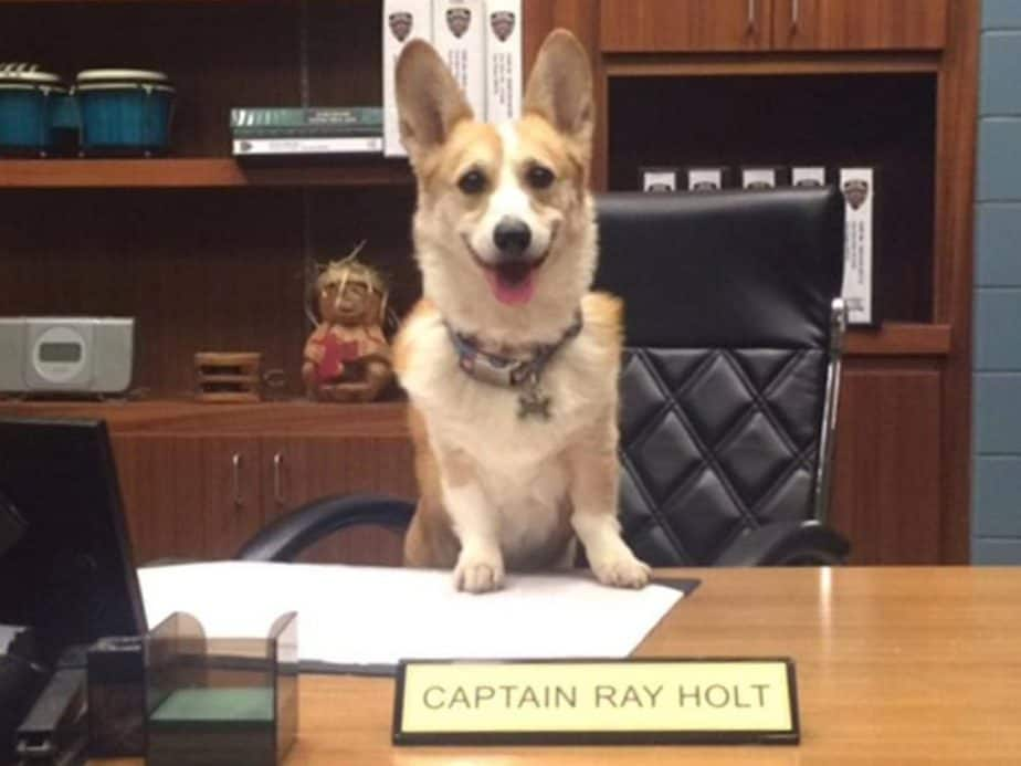 Cheddar no escritório de seu tutor em cena do seriado Brooklyn 99