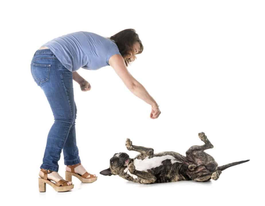 Como adestrar um cachorro em casa?