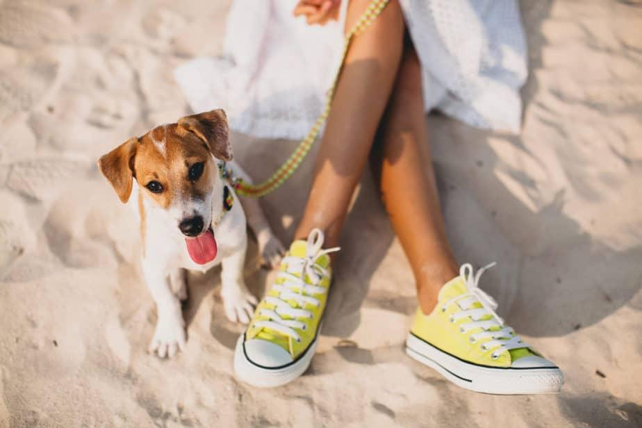 Cachorro do Máskara na areia com um all star amarelo ao seu lado - Créditos da imagem: Freepik